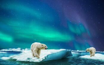 """El archipiélago ruso de Nueva Zembla sufre una """"invasión"""" de osos polares por el cambio climático"""