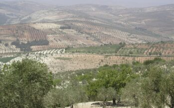 Swiss MP says Turkey selling looted Syrian olive oil to fund militia